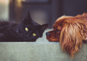 content_Windermere_Blog_-_Pets__2__6_.png